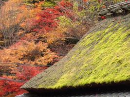 20101128_adashino_02