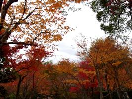 20101128_adashino_03