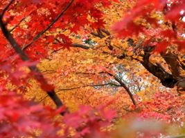 20101128_adashino_04