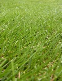 20110723_garden_01