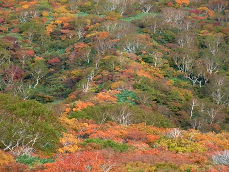 20121009_kurikomayama_23