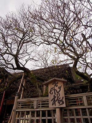 20121111_dazaifu_10