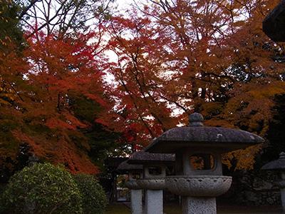 20121124_hiyoshi_15