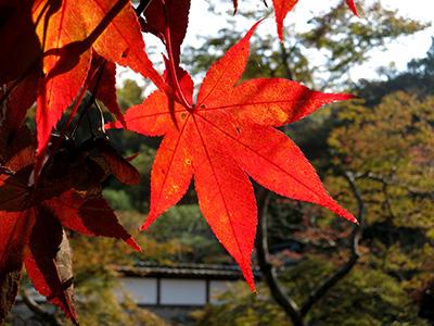 20131116_syoryakuji_09