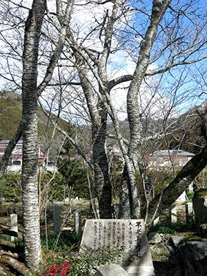 20140211_miyoshino_12