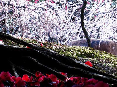 20140321_jonangu_12