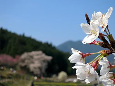 20140409_matabe_02