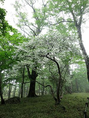 20140608_odaigahara_13_2