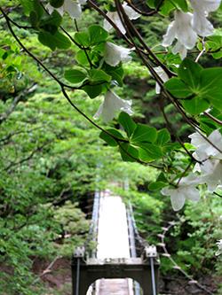 20140608_odaigahara_15